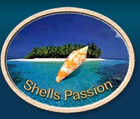 logo Shells Passion